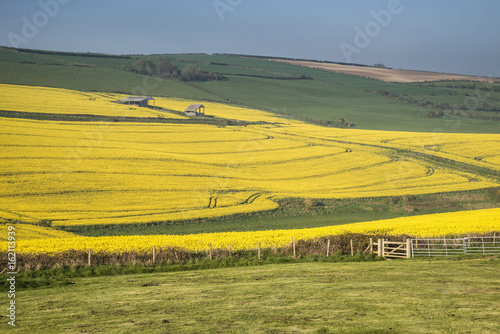 Staande foto Meloen Beautiful landscape image of ripe rapeseed canola crop in Spring in English countryside