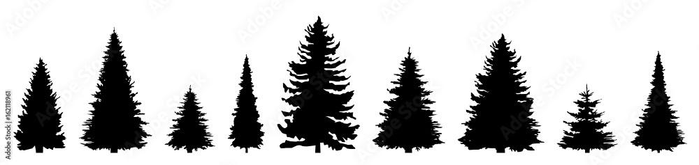 Fototapety, obrazy: Silhouette Nadelbäume