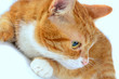 Portrait of a beautiful domestic cat