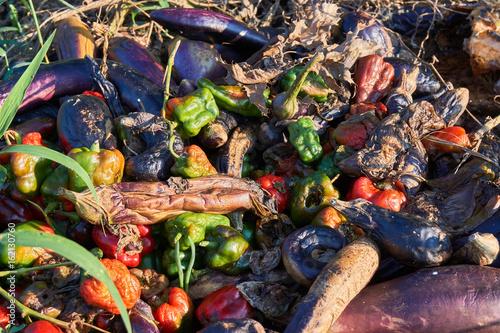 Valokuva 腐った夏野菜
