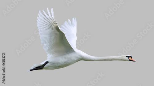 The bird is a Swan in flight. Fototapete