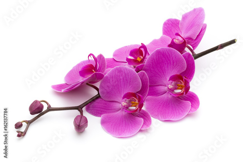 Foto op Canvas Orchidee Pink orchid on the white background.