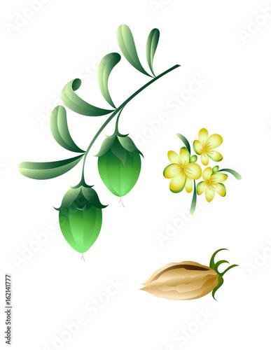 Fotografie, Obraz  Jojoba branch with flowers and fruits