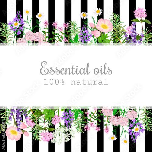 Photo  Popular essential oil plants label set on black stripes