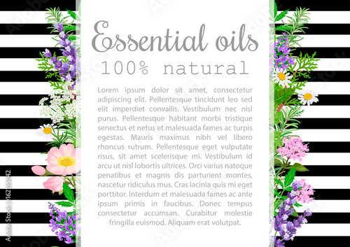 Popular essential oil plants label set. badge with text. Canvas Print