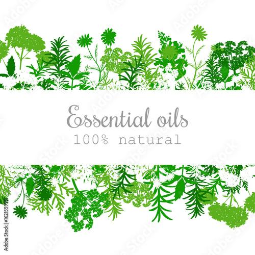 Popular essential oil plants label set in green. Canvas Print