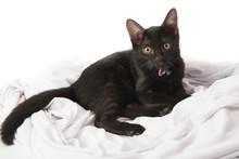 Close Up Black Kittle Cat On W...
