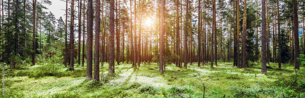 Fototapety, obrazy: Wild trees in forest