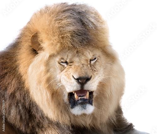 Fotobehang Leeuw Lion fury