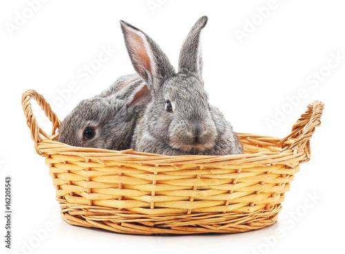Zdjęcie XXL Małe króliczki w koszu.
