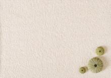 Three Green Sea Urchin Shells ...