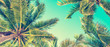 Blue sky and palm trees view from below, vintage style, summer panoramic background