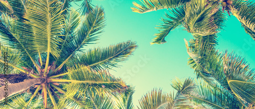 Foto op Aluminium Palm boom Blue sky and palm trees view from below, vintage style, summer panoramic background