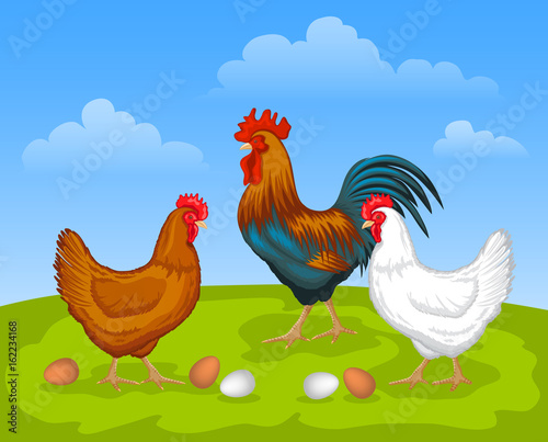 Scene with chickens  Brown and white Hen and Rooster  Male and