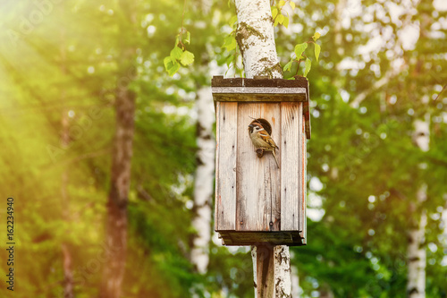 Fotografia Caring for the environment: the sparrow sits on the perch of a birdhouse made by people and placed in a city park to support the population of birds in the city