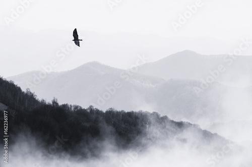 Canvas Prints Hill bird flying over misty hills, monochrome nature landscape