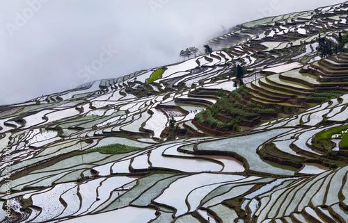 Foto auf Gartenposter Reisfelder Panorama of terraced rice fields in Yunnan Province of China