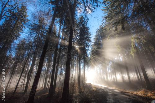 mglisty-i-sloneczny-poranek-w-lesie