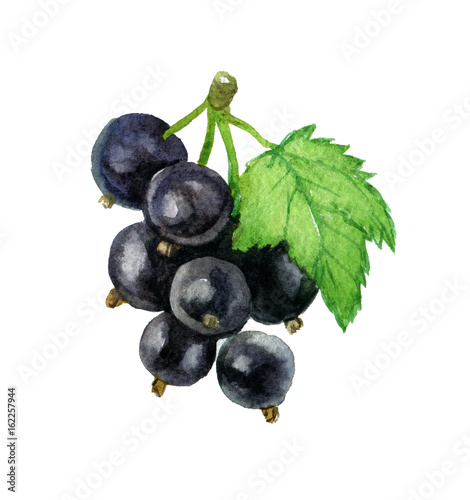 Blackcurrant with leaf isolated on white background, pencil hand draw illustrati Wallpaper Mural