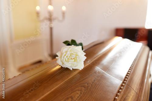 Fototapeta white rose flower on wooden coffin in church