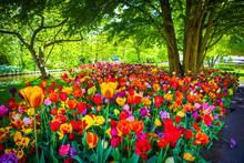Blooming Garden Of Europe, Keu...