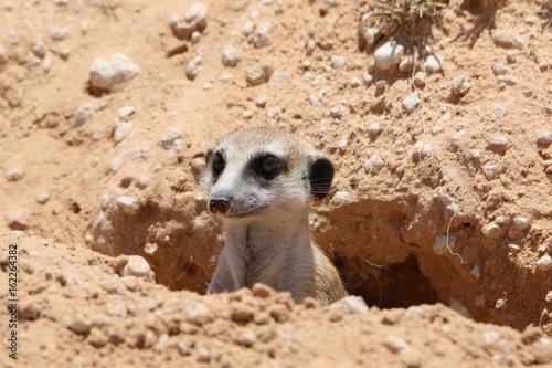 Tuinposter Eekhoorn Erdmännchen