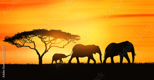 Poster Afrika family of elephants