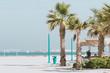 Palm trees near the beach