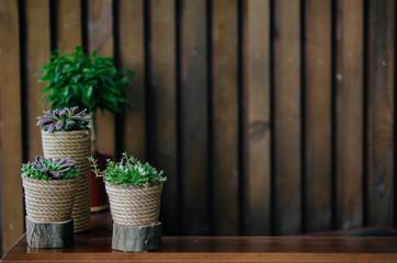 green plants in flower pots