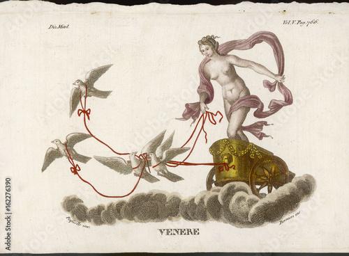 Aphrodite - Venus Canvas Print