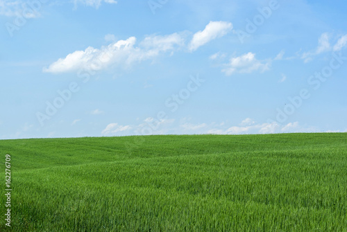 Aluminium Prints Landscapes Field of wheat and blue sky. Nature background, agriculture, plant cultivation