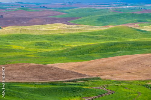 Foto op Plexiglas Groene Amazing green hills. Plowed fields, an incredible drawing of the earth. Steptoe Butte State Park, Eastern Washington, in the northwest United States.