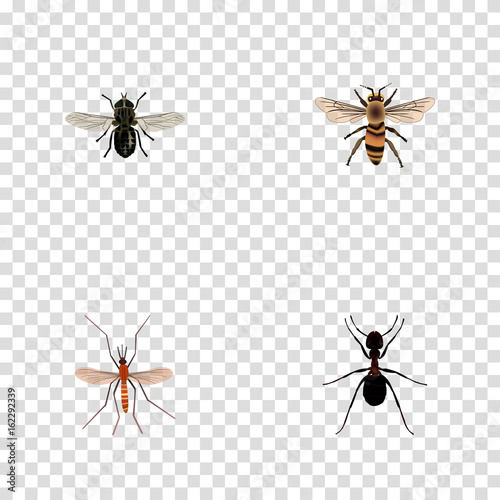 Realistic Midge, Wasp, Ant And Other Vector Elements  Set Of
