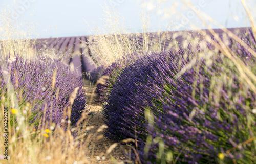 Tuinposter Lavendel lavandes en Provence