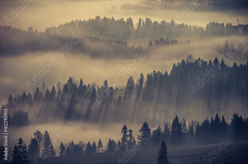 Door stickers Morning with fog Misty mountain forest landscape in the morning, Poland