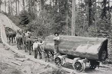 Logging Railway - 1904. Date: ...