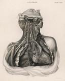 Wycięcie górnej części tułowia z widocznym sercem. Data: 1768 r - 162305980