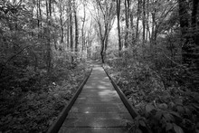 A Wooden Path Runs Through A F...