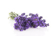 Bouquet Lavender on white background