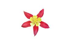 Beautiful Red Flower Aquilegia...