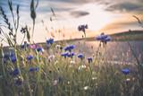 Kwitnące dzikie maki, chaber i rumianek na łące w okresie letnim - 162331958