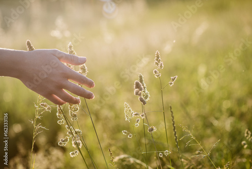 Fotografia  Female hand touching nature