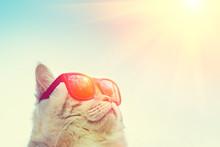 Portrait Of Cat Wearing Sungla...