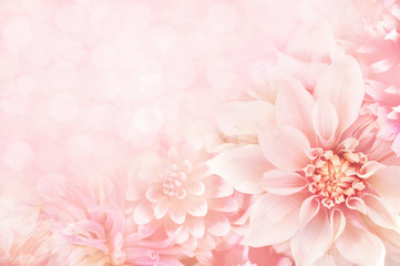 Summer blossoming dahlia, flower bokeh background, pastel and soft floral card