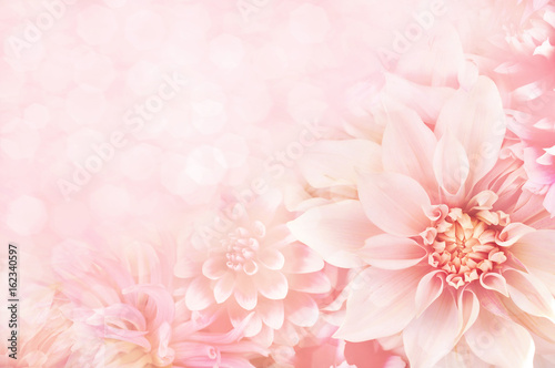 Tuinposter Dahlia Summer blossoming dahlia, flower bokeh background, pastel and soft floral card