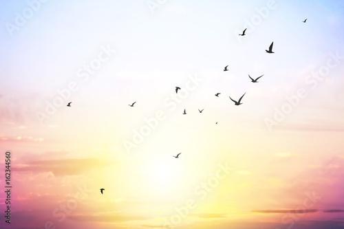 Recess Fitting Bird sky