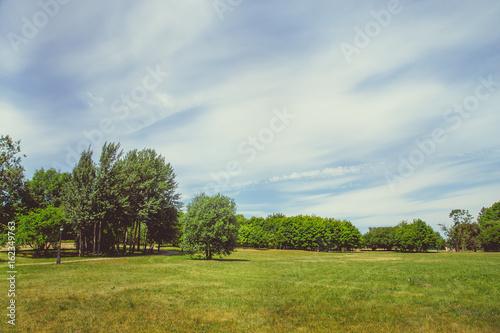 Foto op Plexiglas Weide, Moeras Park in the city center in sunny clear weather in summer