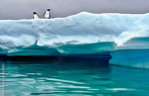 Poster Antarctica Penguins perched on iceberg near Cuverville Island, Antarctica
