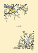 Beautiful Tropical Background With A Cockatoo And Ara Parrot. Two Parrots Sitting On The Branches Of A Tree. Vintage Style. Vector Illustration.