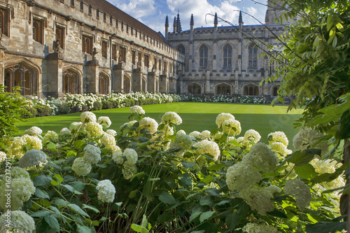 Fotografia The New Building of Oxford Magdalen College with hydrangea